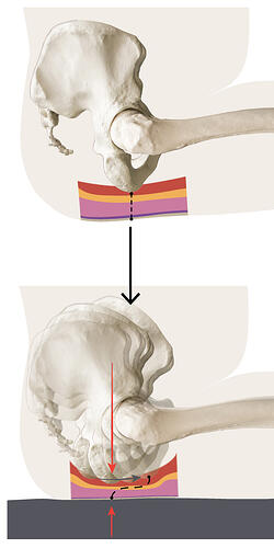 Mechanics-of-pressure-and-shear_Shear-Tissue-Illustration