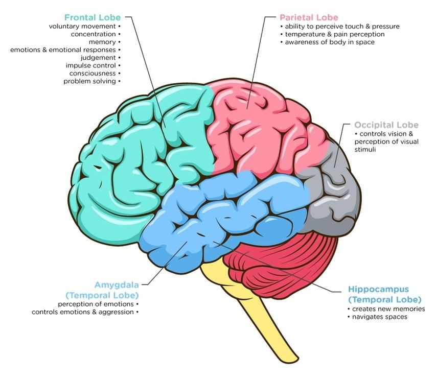 Brain-Image-2_Ana.jpg